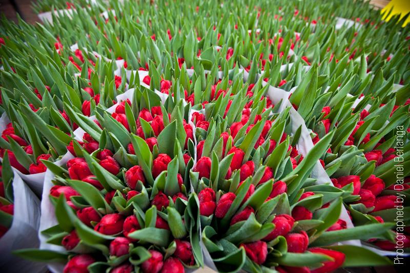 Flores a 16mm.