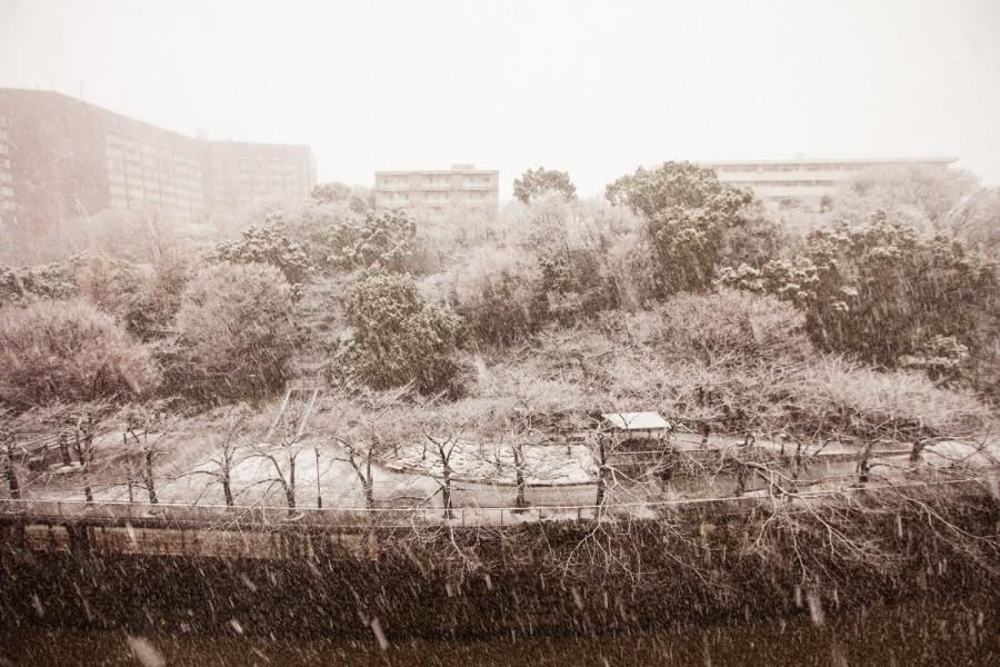 Parque Edogawa nevado