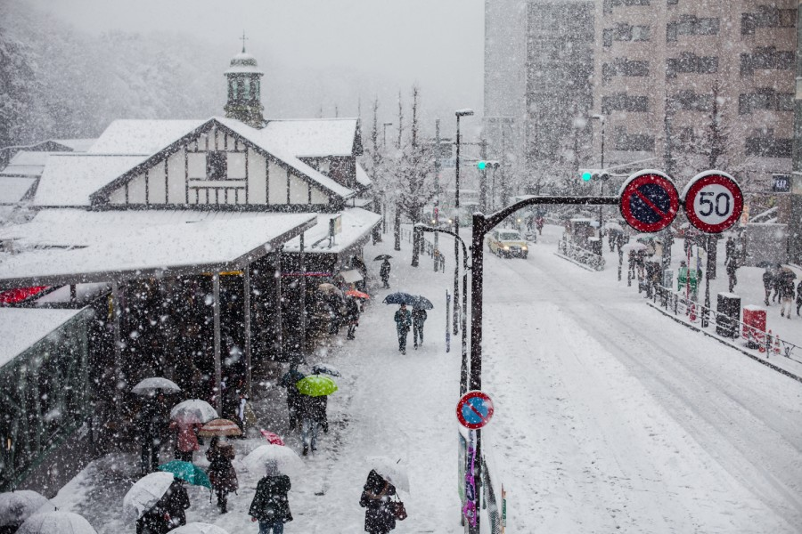 Harajuku nevado