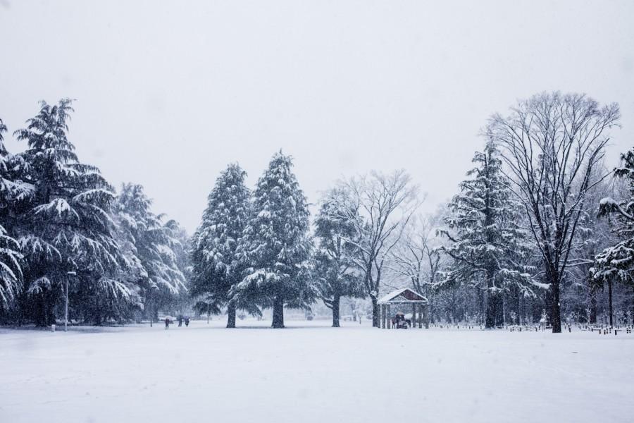 Yoyogi nevado