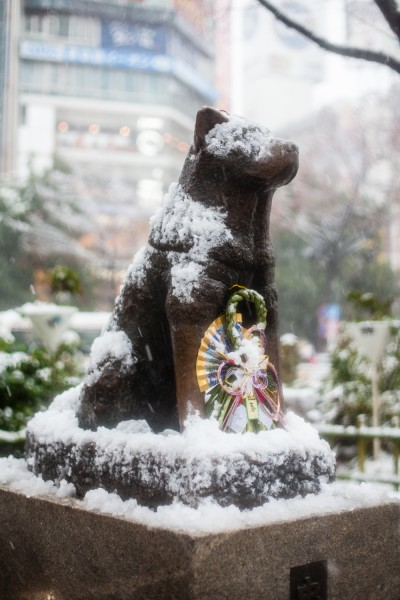 Hachiko nevado